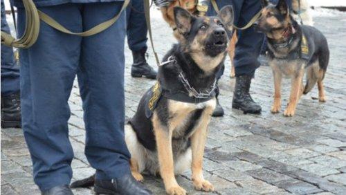 В торговом центре в Одессе ищут взрывчатку