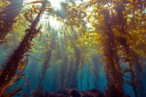Удивительное о мировом океане