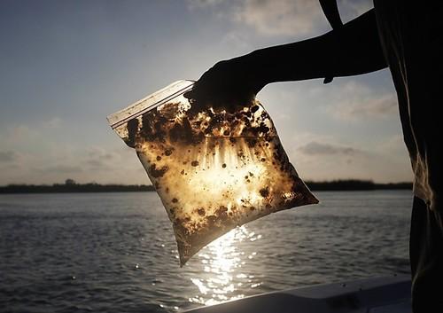 В России замалчивали информацию о разливе нефти на реке