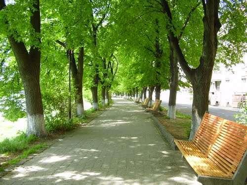 Найдовша липова алея знаходиться в Україні