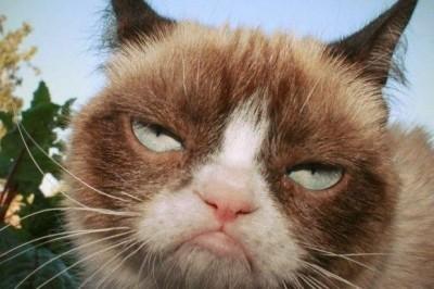 Госдума России решила взяться за количество кошек в квартирах