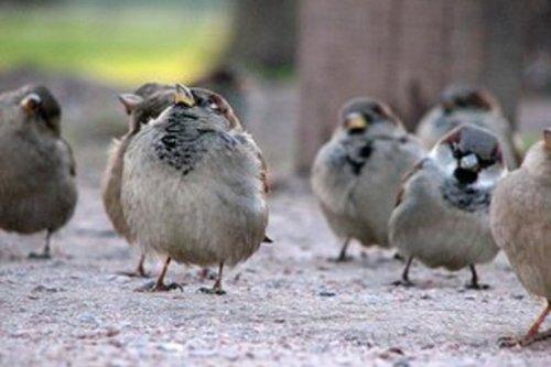 Птицы на дачном участке
