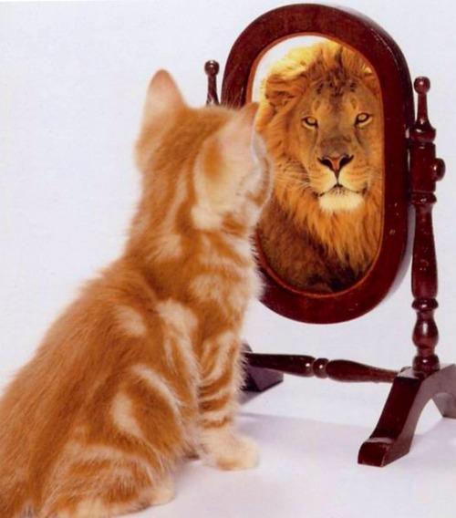 Как кошки реагируют на свое отражение в зеркале (видео)