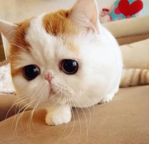22 февраля — День кошки в Японии