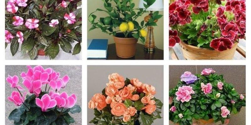 Цветы волгоград, цветы для семейного счастья по фен шуй