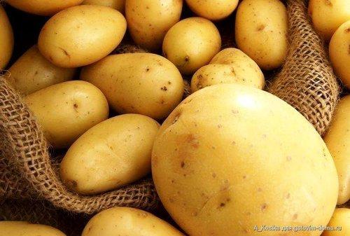 Как обеспечить семью урожаем, выращенным из 10 картофелин