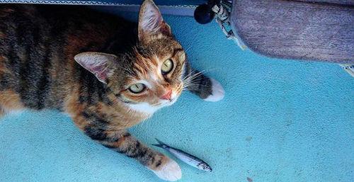 Американка приучила кошку к жизни моряка