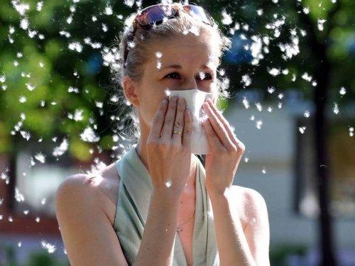 Аллергия на тополиный пух: симптомы, профилактика и лечение