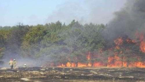 На луганщине в зоне боевых действий горит 15 га леса