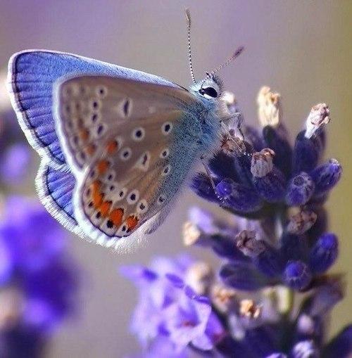 Притча «Исповедь бабочки»