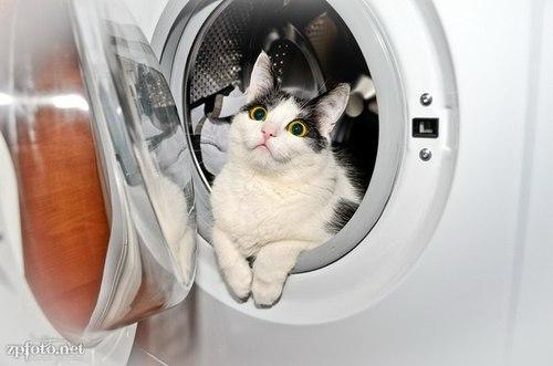 Кот пережил мойку в стиральной машине при температуре 60 градусов