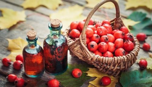 Боярышник: чем плоды помогут здоровью осенью?