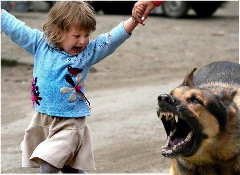 Как объяснить ребенку правила поведения с собаками