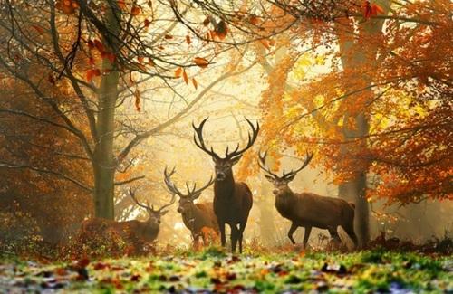 Самые красивые фото осени (фото)