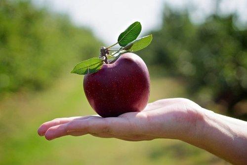 """Притча """"Падающее в руки яблоко"""""""