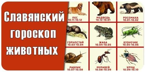 Славянский гороскоп - какое вы животное