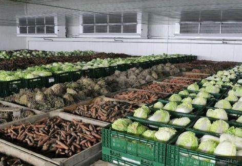 Организация хранения фруктов и овощей на зиму