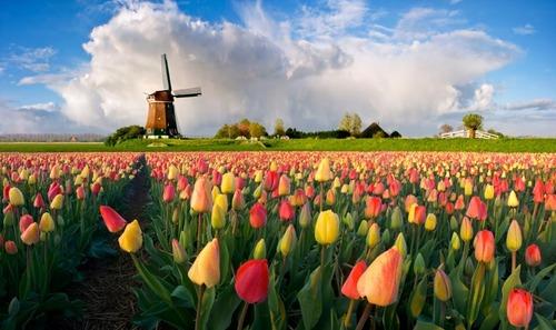 Почему Нидерланды называют Голландией