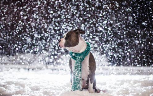 Погода в Украине 25 декабря