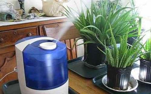 Зима: как избежать ошибок в уходе за комнатными растениями?