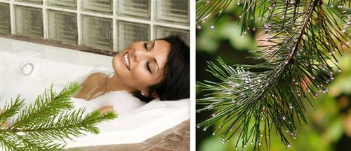 Используем новогодние хвойные иголки  для красоты и здоровья