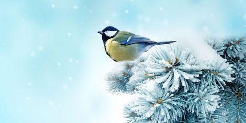 Погода в Украине 21 января: мокрый снег