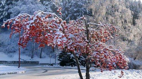 Погода в Украине 26 января: без существенных осадков
