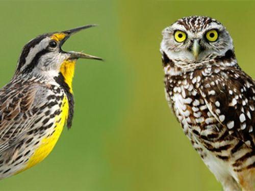 «Жаворонки», «голуби» и «совы»: Как заставить Ваши биоритмы работать на Ваше здоровье