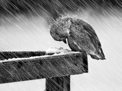 Погода в Украине 4 февраля: мокрый снег, дождь