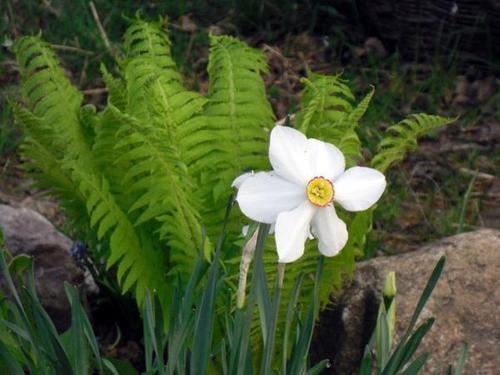 Неприхотливые цветы для начинающих садоводов