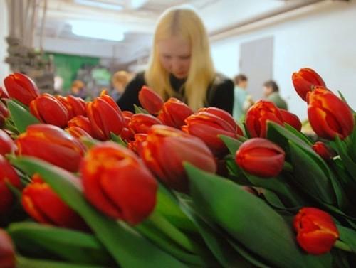 Какие цветы можно, а какие нельзя дарить на 8 марта