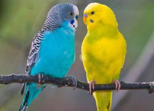 Женщина пыталась отучить своих попугаев говорить эту фразу. Но никогда не ожидала такого результата!