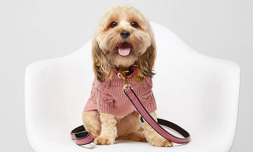 Одежда для собак: так ли это важно?