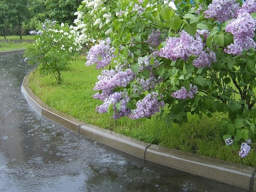 На Пасху ожидают дожди, а на майские праздники – жару