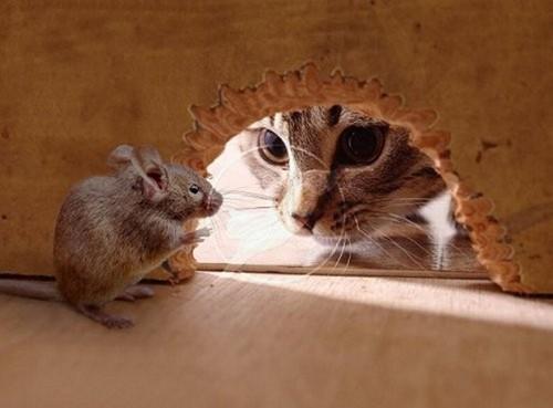 """""""Кошка, наконец-то, превратилась в мышку"""" - Дмитрий Бачевский"""