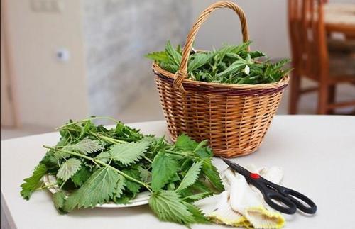 Дачный лайфхак: Крапива вместо ядов и пестицидов!