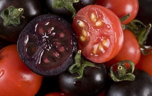 Основные правила выращивания томатов