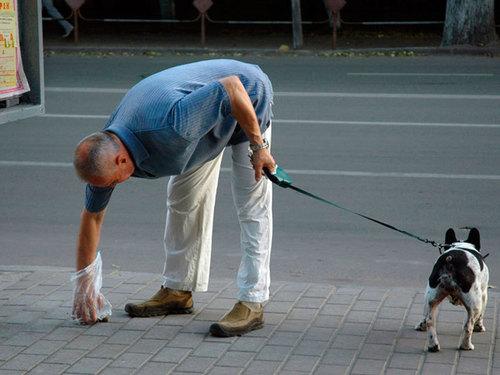 В Украине вводят новые правила содержания домашних животных: за что грозит штраф