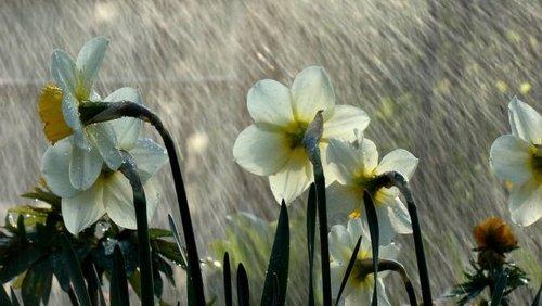 Прогноз погоды в Украине 24 апреля: прохладно и дождливо
