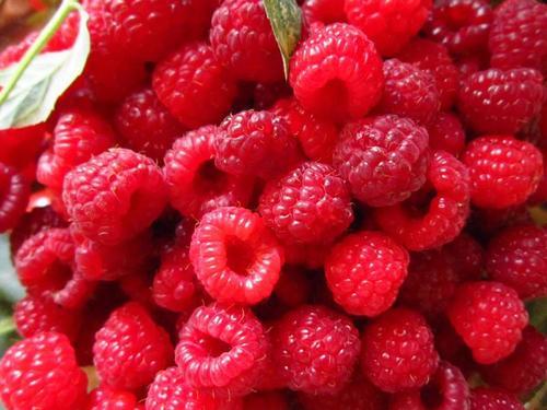 Названа ягода, способствующая омоложению организма
