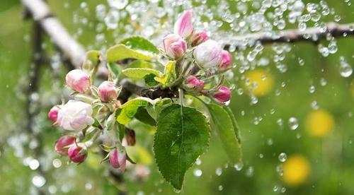 Как правильно поливать деревья от саженца и до взрослого дерева