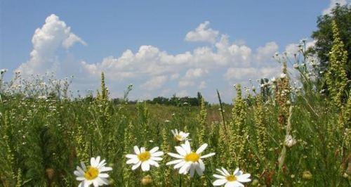 Прогноз погоды в Украине на 17 августа