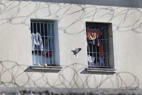 Полицейский застрелил голубя, которого использовали для контрабанды наркотиков