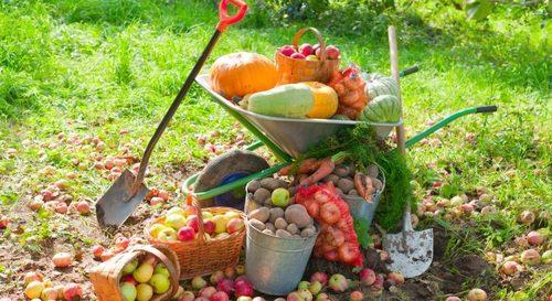 Работы в саду и огороде в сентябре: пять важных дел