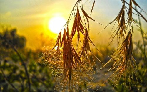 16 сентября – День Василисы: Приметы и суеверия