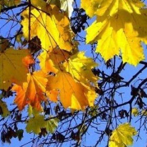 20 сентября – День Созонта: Приметы и суеверия