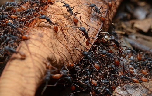 40% муравьев-рабочих ничего не делают