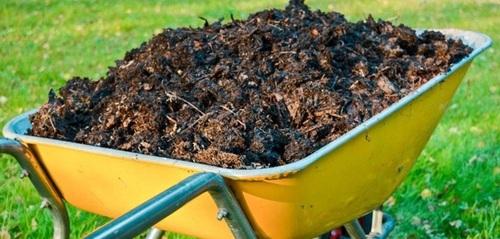 Польза компоста и как правильно создать компостную яму