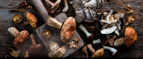 Симптомы и первая помощь при отравлении грибами