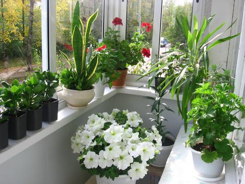 10 секретов цветника в квартире